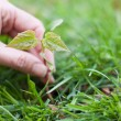Hand holding a small tree over green — Stock Photo #10350207
