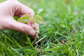 Hand holding a small tree over green — Stock Photo