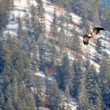 Bald Eagle Flying — Lizenzfreies Foto