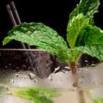 Fresh mint garnish — Stock Photo #8419531