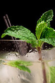 Fresh mint garnish — Stock Photo