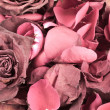 Royalty-Free Stock Photo: Dried rose background