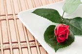 Rosa roja pequeña — Foto de Stock