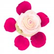 Rose shaped cupcake — Stock Photo #8680079