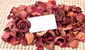Dried Rose Background — Stock Photo