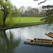 Stock Photo: Punting at Cambridge University
