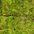Old wall of the moss . — Stock Photo
