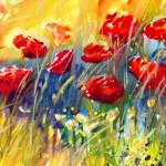 Poppies, flowers, — Stock Photo