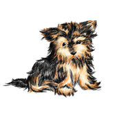 Yorkshire terrier — Stock Vector