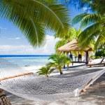 Empty hammock between palm trees on a beach — Stock Photo