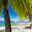 Hammock between palm trees on tropical beach - Stock Photo