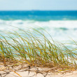 Green grass on sandy dune overlooking beach — Stock Photo