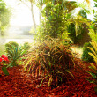 Beautiful natural garden with colorful tropical plants - Stock Photo