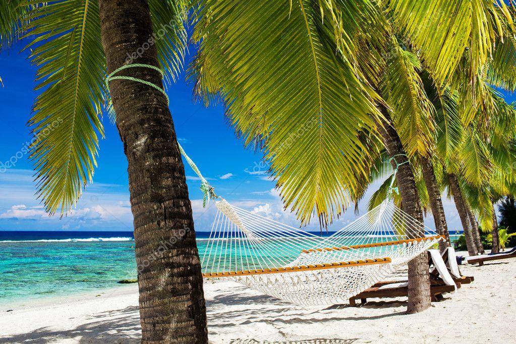 h ngematte zwischen palmen am tropischen strand stockfoto mvaligursky 10350143. Black Bedroom Furniture Sets. Home Design Ideas
