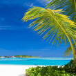 Small palm tree hanging over blue lagoon — Stock Photo
