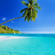 Palm tree hanging over lagoon with blue sky — Stock Photo