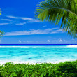 Deserted tropical beach framed by palm trees - Stock Photo