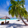 Deck chairs under palm trees on a tropical beach - Stockfoto