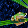 Little green tree frog sitting on green leaf - Stock Photo