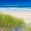 Grass and sandy beach on sunny day of Gold Coast — Stock Photo