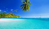 Palmera colgante sobre la laguna con cielo azul — Foto de Stock