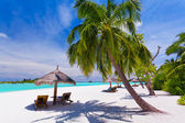 Deck chairs under palm trees on a tropical beach — Foto Stock