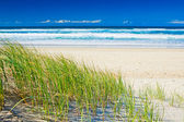 Grass and sandy beach on sunny day of Gold Coast — Foto Stock