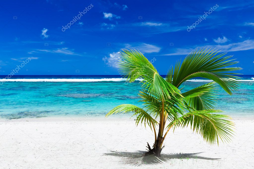 Single small palm tree hanging over stunning blue lagoon — Stock Photo #9186249