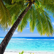 Palm tree overlooking amazing blue lagoon and beach — Stock Photo #9650822