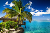 Tropical bungalow and palm tree next to amazing lagoon — Stok fotoğraf