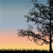 Tree Silhouette at Sunset — Stock Vector