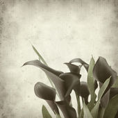 Textured old paper background with darl purple calla lilies — Stock Photo