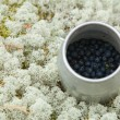 Small cylindrical container with freshly picked bilberries, set — Zdjęcie stockowe #10255509