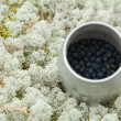 Foto de Stock  : Small cylindrical container with freshly picked bilberries, set