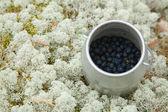 Kleinen zylindrischen behälter mit set frisch gepflückten heidelbeeren — Stockfoto