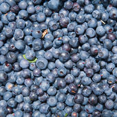 Freshly picked uncleaned bilberries — Stock Photo