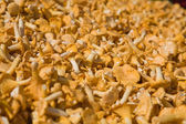 Chanterelle mushroom background, marketplace — Stock Photo