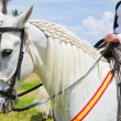 "CORRALEJO, SPAIN - APRIL 28: Horses are on show as a part of ""Fe — Stockfoto"