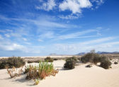 Fuerteventura, Corralejo sand dunes — Stock Photo