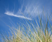 Background of Marram Grass and cirrus clouds — Stock Photo