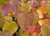 Осенние листья — Стоковое фото
