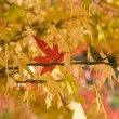 Stock Photo: One bright red autumn leaf stick on yellow trees;