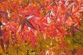 Jasny czerwony autumn odchodzi — Zdjęcie stockowe