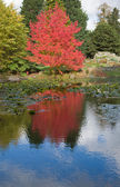 Red color in the foliage, autumn, — Stock Photo