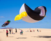 FUERTEVENTURA - NOVEMBER 13: Kite Festival — Stock Photo