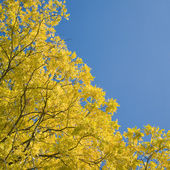 Autumn leaves, sunshine — Stock Photo