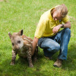 Baby tapir in Linton Zoo — Stock Photo