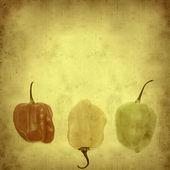 Old paper background with scotch bonnet chilli peppers horizonta — Stock Photo