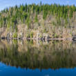 Northern spring - forest lake — Stock Photo #8901848