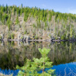 Northern spring - forest lake — Stock Photo